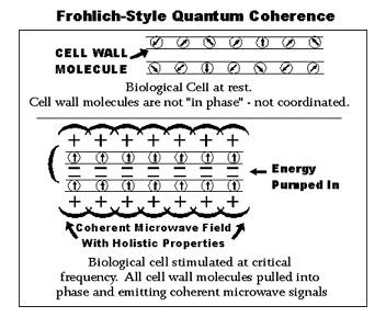Quantum Coherence